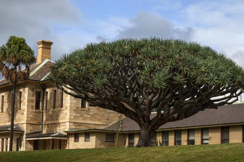 Beautiful Tree, Beautiful Buildingby Hayley Anderson